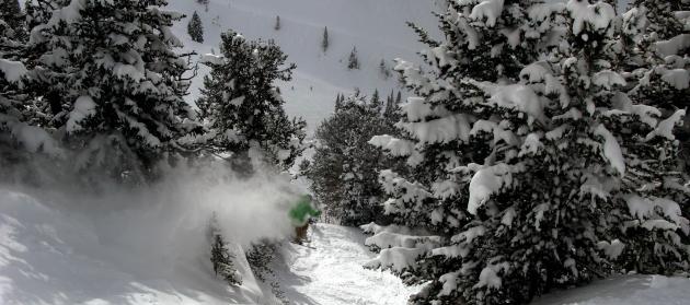 Dylan Brown, Snowbird