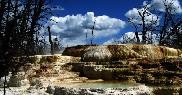 Narrow Gauge hot spring, near Mammoth hot springs.